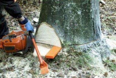 7 Best Felling Wedges (May 2020) – Reviews & Buying Guide