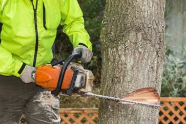 3 Types of Tree Felling Cuts (Explained)